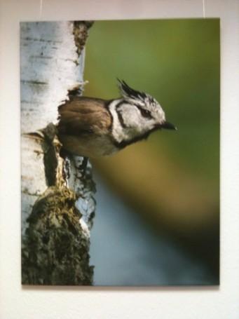Tierfotografie auf Leinwand