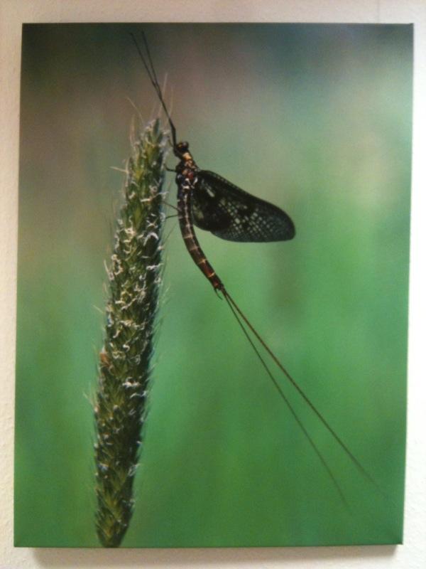 L'insecte et l'herbe